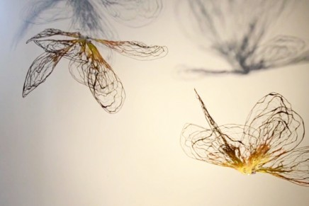 Flowerflies in My Studio